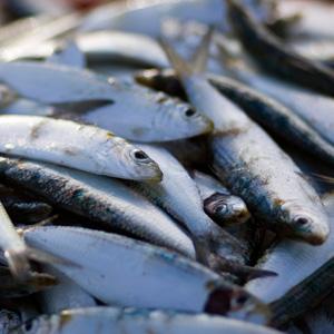 Pescados saludables